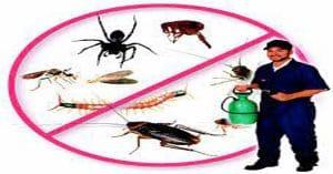 افضل شركة مكافحة حشرات بحوطة سدير