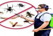 افضل شركة مكافحة حشرات بثادق