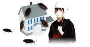 افضل شركة مكافحة حشرات بضرماء